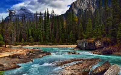 Yoho Valley, 4k, mountain river, forest, Yoho National Park, Canada
