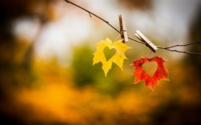 autumn leaves, hearts, love, fall, two hearts