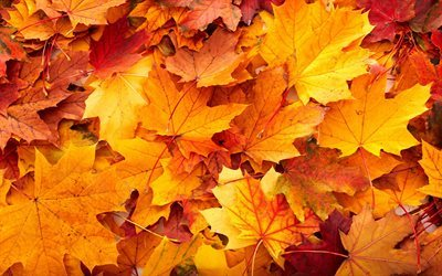 autumn, autumn leaves, fallen leaves, autumn landscape