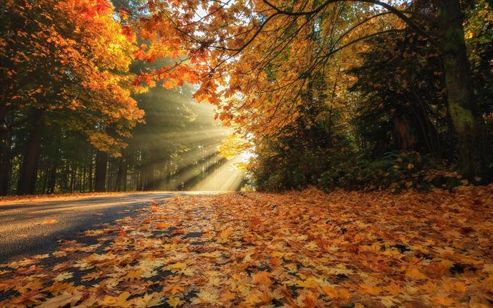 foto de Télécharger fonds d'écran paysage d'automne, le parc, les feuilles ...