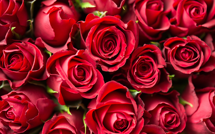 Descargar Fondos De Pantalla Rosas Rojas 4k Rosas Flores Rojas