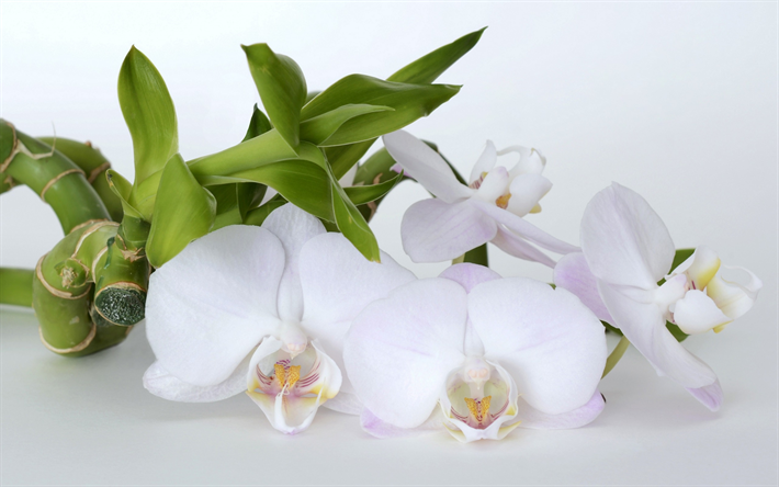 Download wallpapers white orchid tropical white flowers beautiful white orchid tropical white flowers beautiful flower orchids mightylinksfo