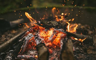 bonfire, flame, burning tree, camp, fire