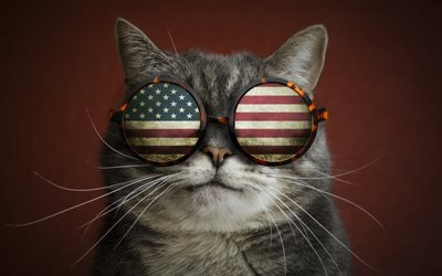 funny cat, american flag, funny animals, cat with glasses, flag of USA