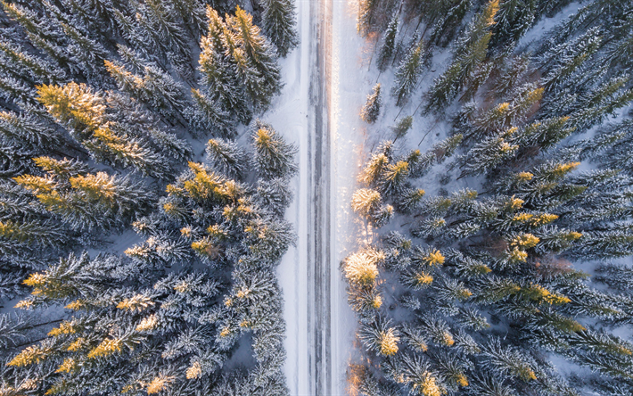 winter, forest, top view, road, snow, snowy forest, view from above