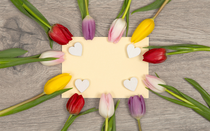 download wallpapers colored tulips spring a template for a