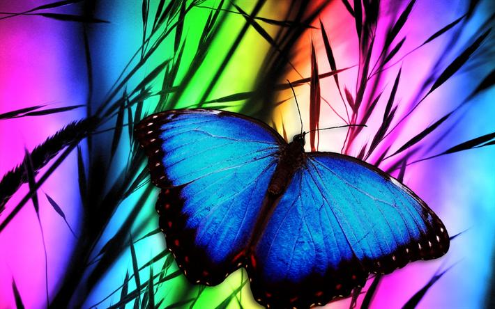 Scarica sfondi farfalla arte erba close up farfalla for Immagini farfalle per desktop