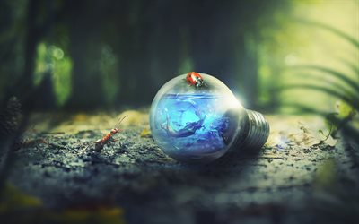4k, ecology concept, light bulb, ant, ladybug, forest