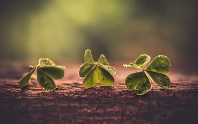 Clover, green leaves, macro, tree, ecology concept