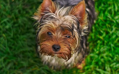 Yorkshire Terrier, close-up, Yorkie, bokeh, cani, animali, soffici cane, animali domestici, Yorkshire Terrier Cane