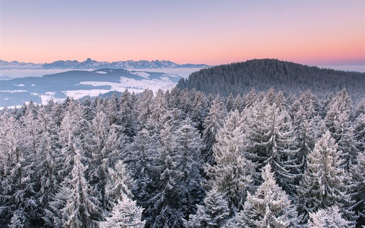 sunset, winter, forest, snow, trees, winter landscape