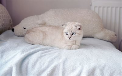 Scottish Fold, white cats, pets, cat on the bed, white scottish fold cat