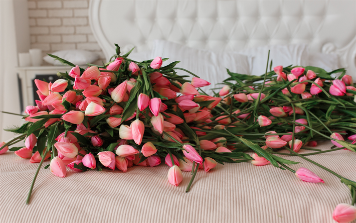pink tulips, beautiful gift, pink flowers, many flowers, tulips