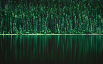 forest lake, green trees, forest, beautiful nature, lake landscape, Pine tree forest