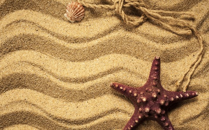 sand, beach, starfish, shells