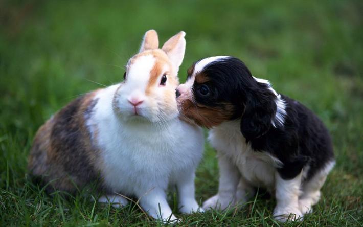 Herunterladen hintergrundbild collie hund hase for Minimalismus haustiere