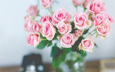 rose bouquet, pink roses, beautiful flowers, roses