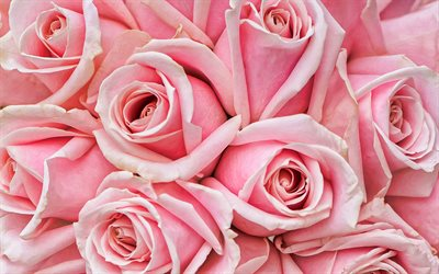 pink roses, macro, pink flowers, bokeh, roses, buds, pink roses bouquet, beautiful flowers, backgrounds with flowers, pink buds
