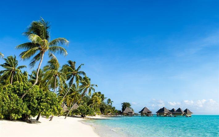 Scarica sfondi maldive paradiso spiaggia oceano palme for Desktop gratis estate