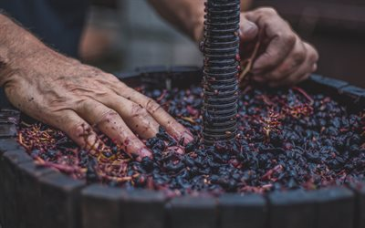 press for grapes, hand made wine, crush of grapes, fruit, wine, hands, grapes