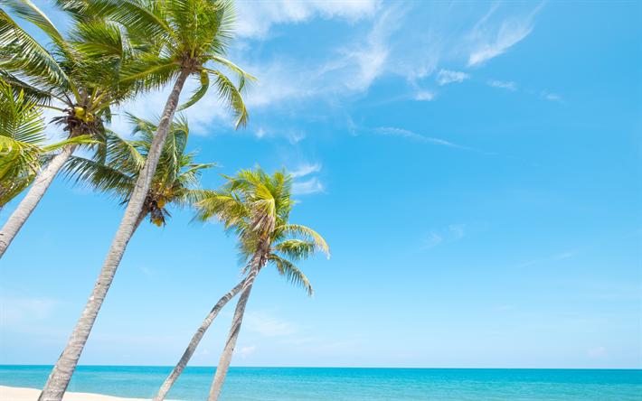 Tropical Island Palms Beach Ocean