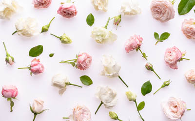background with roses, white roses, pink roses, flower background, rosebuds