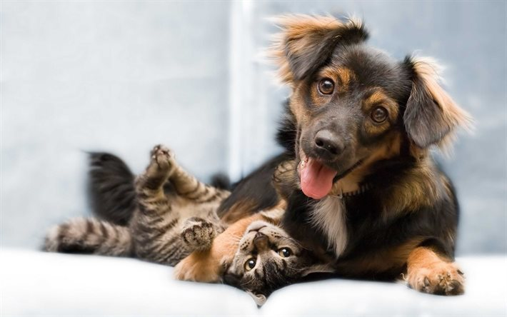 Friends, cat and dog, kitten and puppy, cute animals