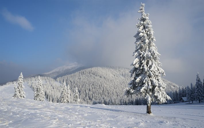 winter, mountains, snow, forest, mountain winter landscape