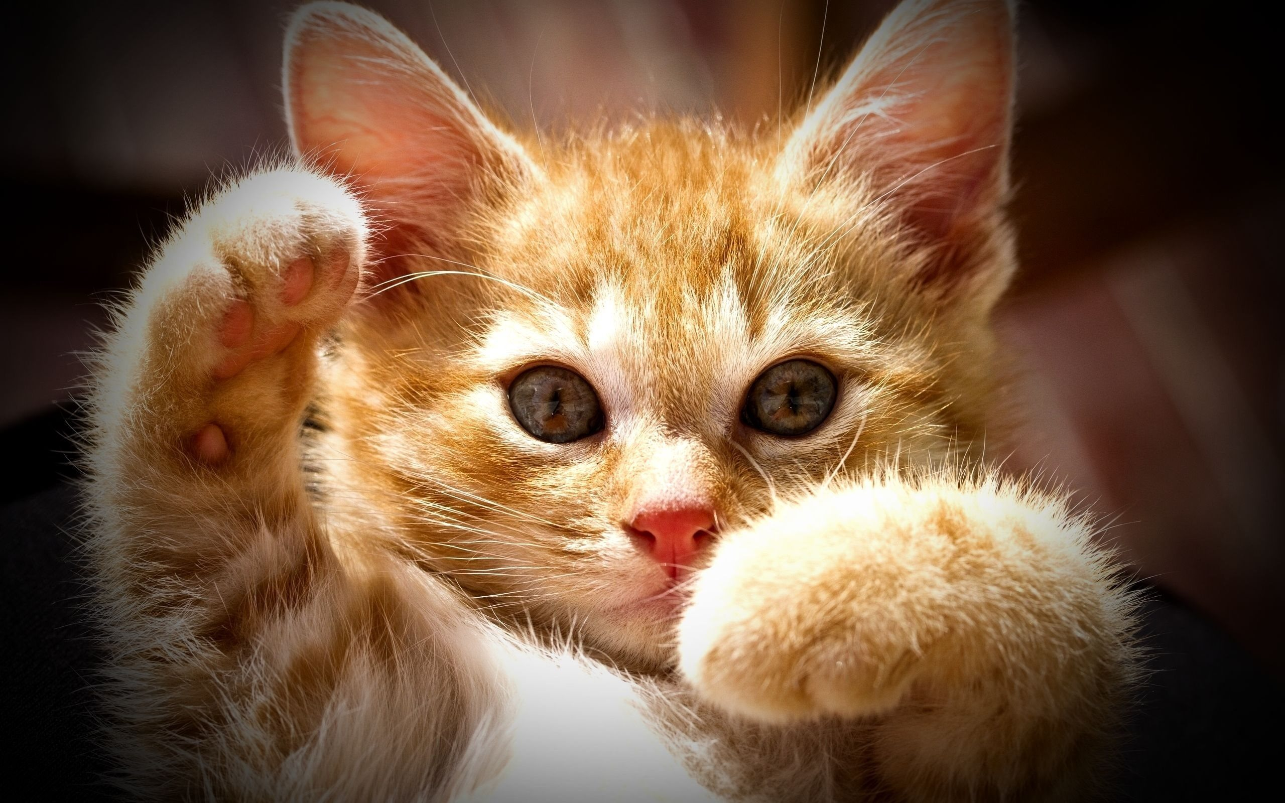 kittens, red-headed cat, cute animals, cats