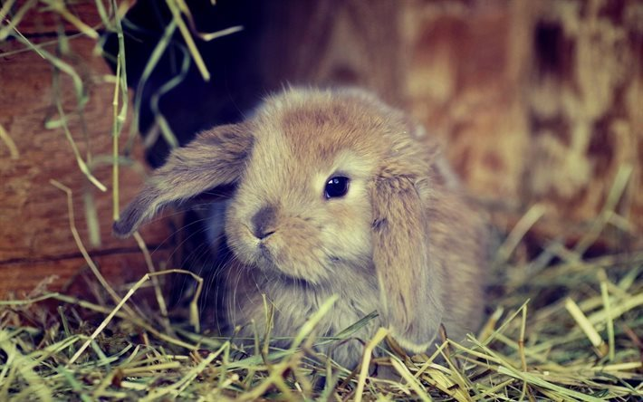 rabbit, furry animal, blur, cute animals