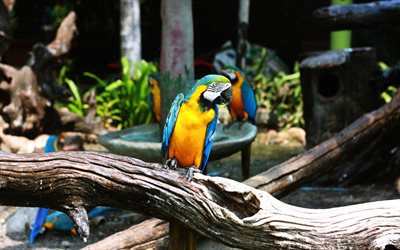 4k, macaw, zoo, parrots, branch, colorful bird