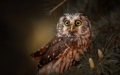 owl, wildlife, beautiful birds, forest birds, big eyes