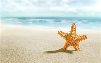 starfish, beach, sand, sea, travel