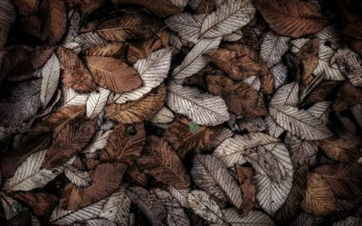 leaves, autumn, Fallen leaves, dried leaves