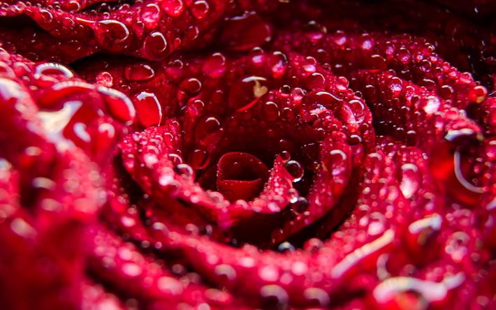 rosor i vatten