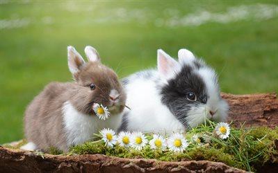 Herunterladen hintergrundbild kaninchen niedlich tiere for Minimalismus haustiere