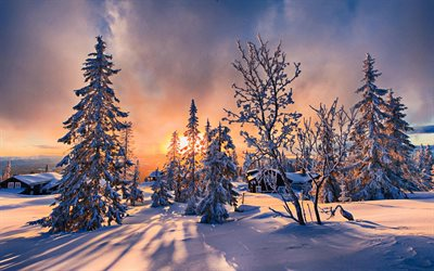 winter sunset, snowdrifts, HDR, orange sun rays, winter nature, forest, snowy trees