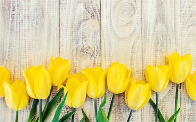 yellow tulips, wooden background, light boards, yellow flowers, tulips, beautiful flowers, spring