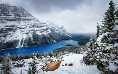 Canada, Peyto Lake, winter, forest, mountains