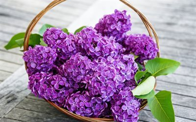 Lilac, spring flowers, bouquet of lilacs, spring