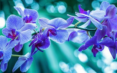 orchid, branch, close-up, purple orchids