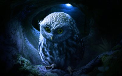 Small Owl, wildlife, owl in the nest, moon, night, predatory bird, Owl at night, Owl, Strigiformes