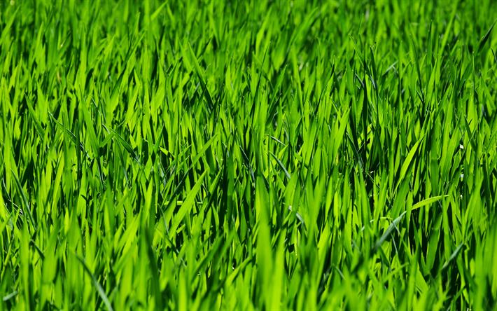 Scarica Sfondi 4k Texture Verde Erba Prato Primavera Macro