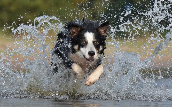 Golfo Aranci (SS): Il padrone salva il suo cane dopo essere finito in acqua: ecco l'accaduto.