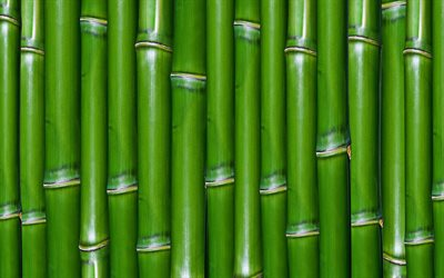 green bamboo texture, 4k, bambusoideae sticks, bamboo textures, bamboo canes, bamboo sticks, green wooden background, bamboo