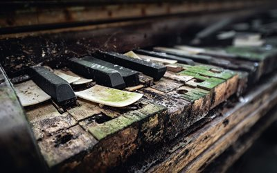 old piano keys, old piano, wooden piano keys, wood, moss
