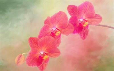 pink orchid, branch, beautiful pink flowers, orchids, potted plants
