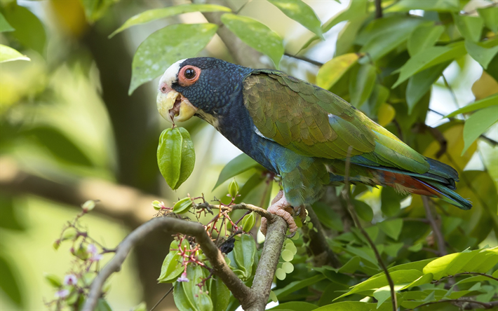 blue-green parrot, forest, beautiful bird, tropical bird