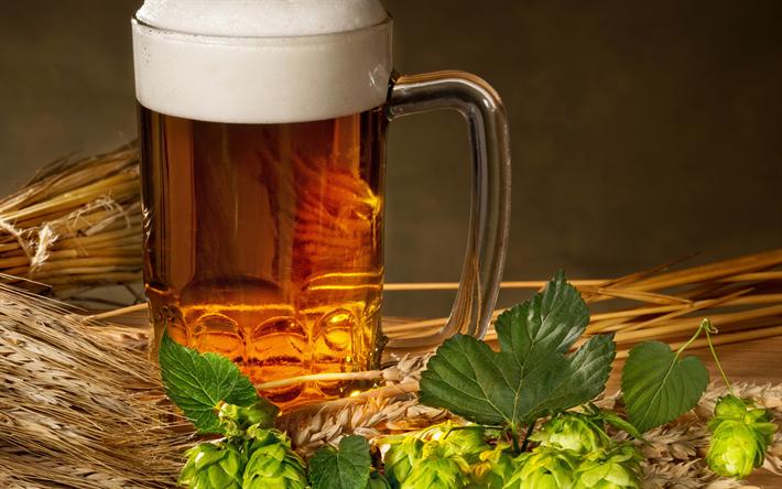 Download Wallpapers Beer Hops Beer Mug Glass Wheat For