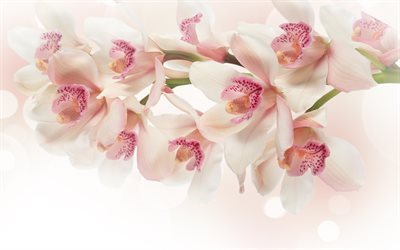 orchid, pink orchid, orchid branch, tropical flowers